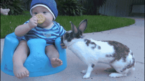 Baby Stealing GIF - Find & Share on GIPHY