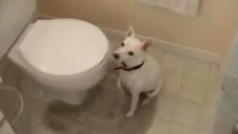 Toilet GIF - Find & Share on GIPHY