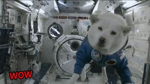 Space Doge GIF - Find & Share on GIPHY