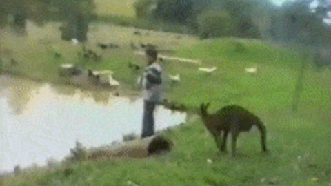 Australia GIF - Find & Share on GIPHY